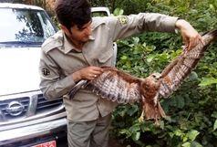 سربازمحیط زیست رودبار ناجی عقاب گرفتار در چنگال مرگ شد