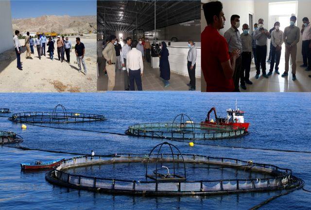 بندرلنگه قطب اصلی پرورش ماهی در قفس کشور