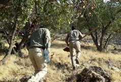 خشکیدگی تودهای پنج هزار هکتار از جنگلهای بلوط