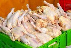 قیمت مرغ تنظیم بازاری 11 هزار تومان است / مرغ 11 هزار تومانی در فروشگاه های رفاه، معلم و اتکا