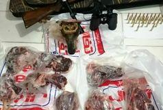 دستگیری شکارچی قوچ وحشی