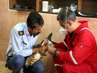 نجات یک بهله شاهین از دست قاچاقچیان در مسجدسلیمان