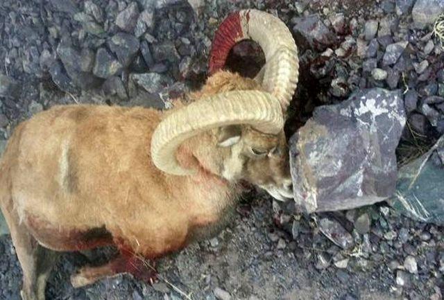 باند شکارچیان غیرمجاز در دهلران دستگیر شدند