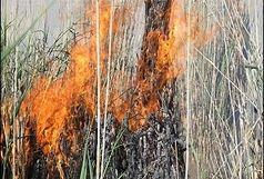 آتش سوزی در  نیزارهای کارون مهار شد