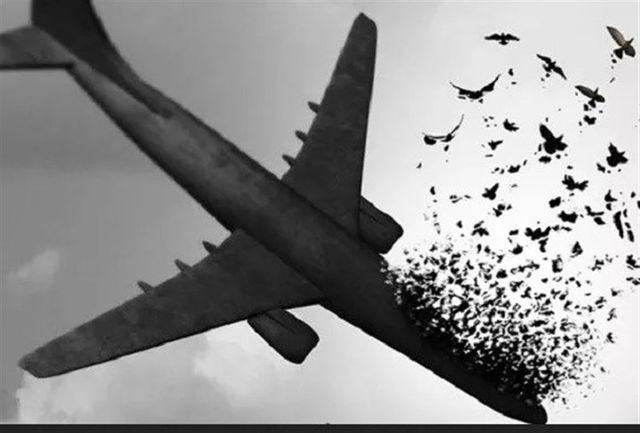 ادای احترام جشنواره خارجی به جانباختگانِ پرواز ۷۵۲