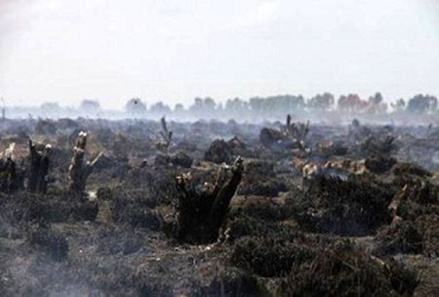 هنوز علت آتشسوزی تالاب بینالمللی میانکاله مشخص نیست