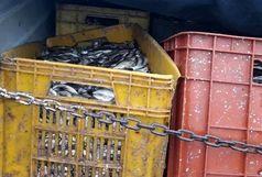 3 تن ماهی فاسد در آستارا کشف شد