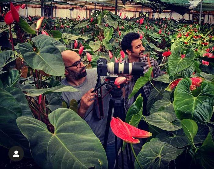 زیباترین گل های ایران در مستند «گلخانه ایرانی»