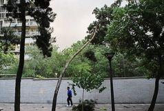 تندباد در راه تهران