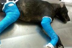 دستگیری فرد سگ آزار در رودسر