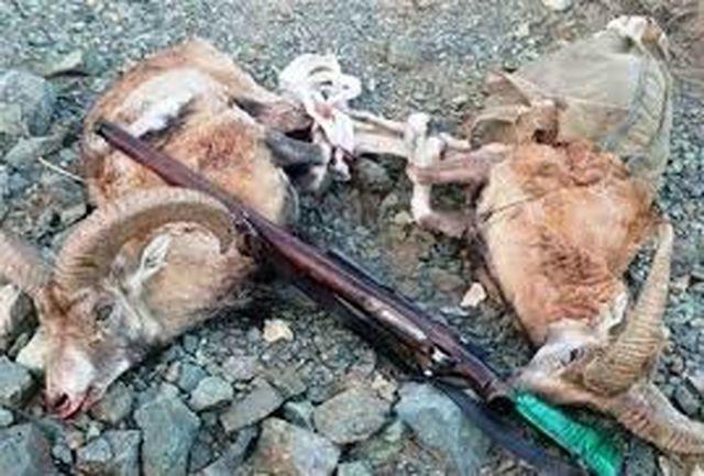 مجازات سنگین برای شکارچی بزکوهی در الشتر