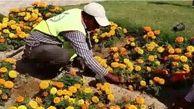 کاشت بیش از 350 هزار بوته گل فصلی در قشم آغاز شد