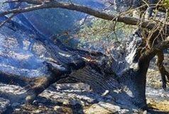 پایان آتش سوزی جنگل های گیلان