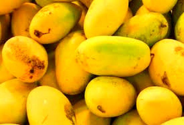 خواص میوه های تابستانی/ انبه