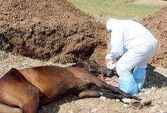 معدوم سازی 3 راس اسب مبتلا به بیماری مشمشه در خرم آباد