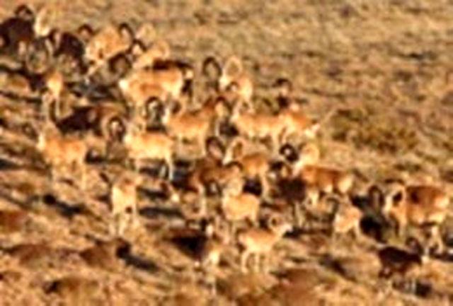 افزایش17 درصدی وحوش در مناطق حفاظت شده همدان