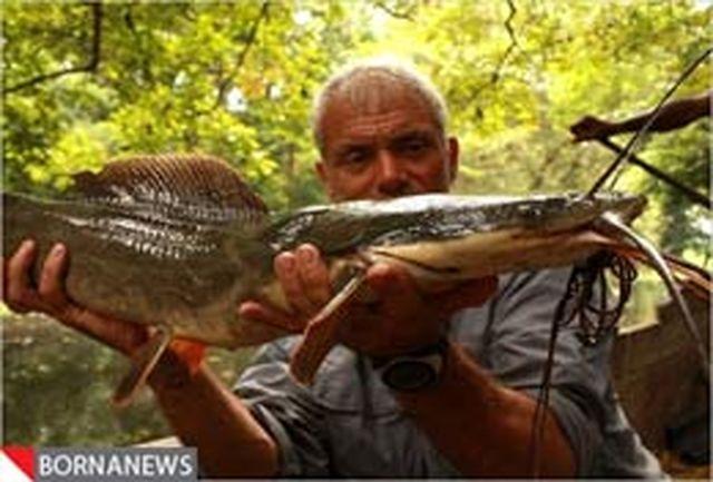 تصاویری از ماهیهای غول پیکر که تابحال ندیدهاید