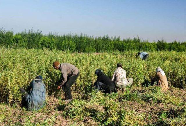 ۱۷۰ میلیارد ریال تسهیلات اشتغال روستایی پرداخت شد