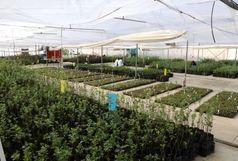 پرداخت ۲۲۲ میلیارد تومان تسهیلات رونق تولید در بخش کشاورزی آذربایجانغربی