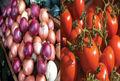 ساماندهی عرضه نهاده های دامی در استان تهران/ قیمت پیاز و گوجه فرنگی متعادل می شود