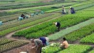 کمترین اعتبارات کشاورزی استان به نظرآباد رسیده است