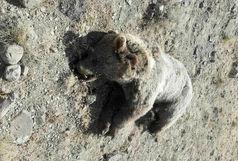 زجرکش کردن وحشیانه یک خرس قهوهای