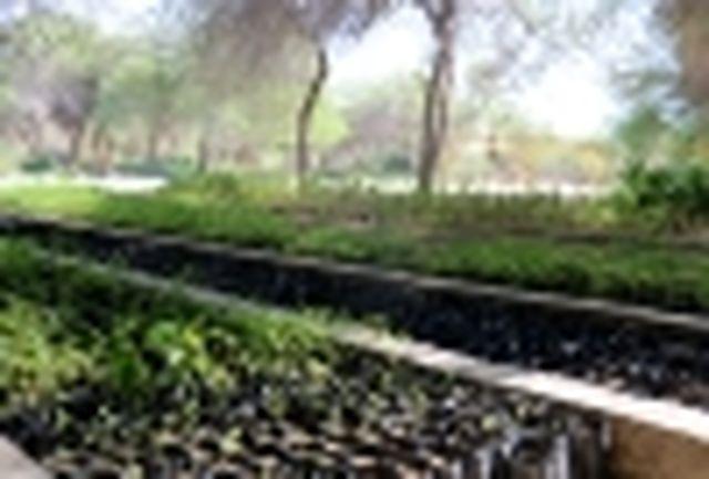 نهالستان باغو بندرعباس ظرفیت تولید و ارسال نهال به استانهای همجوار را دارد