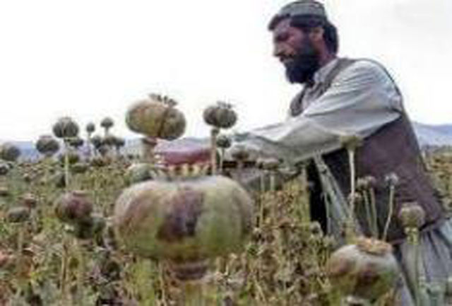 در کشور افغانستان 500 کارگاه تولید هروئین وجود دارد