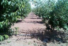 اجرای طرح اصلاح و احیای باغات میوه در شهرستان البرز