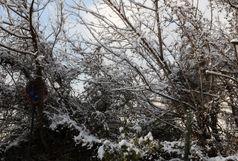 کاهش دما و بارش برف و باران در استان