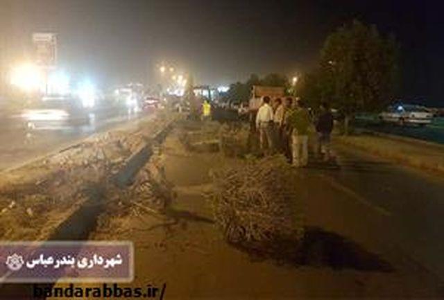 اجرای پروژههای عمرانی بدون قطع درخت/ جابجایی 290 اصله درخت