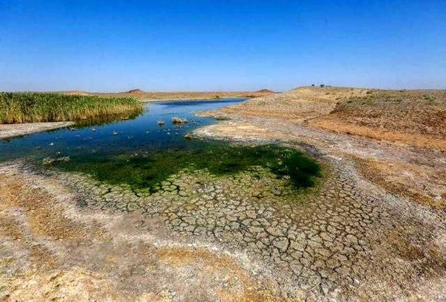 واکنش به آزادسازی کشت برنج دریکی از خشکترین سالهای آبی!