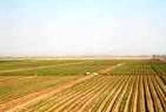 رفع تصرف ۷۵ هکتار از اراضی ملی همدان