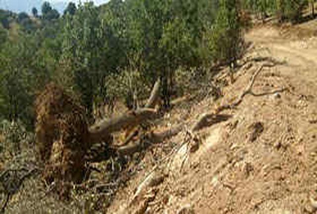 زاگرسنشینان در سوگ خشکیدن جنگلهای بلوط