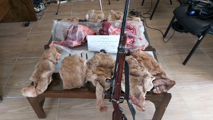 دستگیری شکارچی کل وحشی در سیرجان
