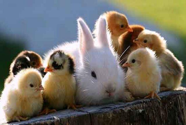 هشدار سازمان جهانی بهداشت؛ ارتباط با حیوانات خانگی را محدود کنید