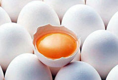 کشف انبار احتکار تخم مرغ در اهر