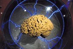 مواد غذایی که مغزتان را از کار می اندازد!
