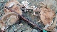 شکار ۱۵ راس پستاندار از سوی شکارچیان متخلف در زنجان