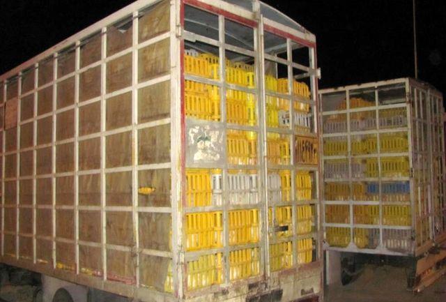"""توقیف 7 تن و 500 کیلو مرغ زنده در """"کاشان"""" + عکس"""