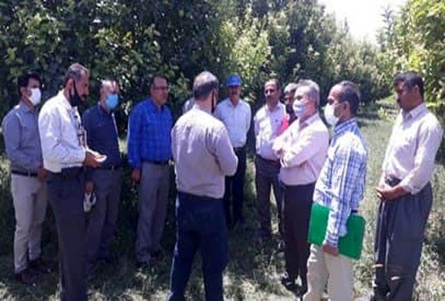 اجرای طرح یاوران تولید با بیش از ۷۶ بازدید میدانی در آذربایجان غربی