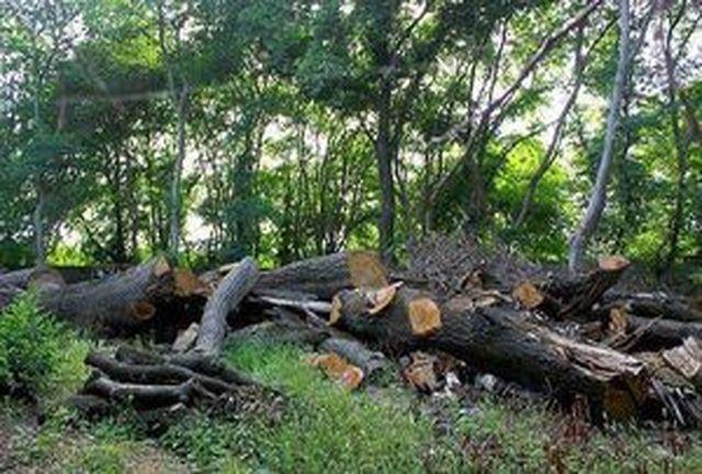 دستگیری متخلف قطع درختان جنگلی در سیروان