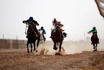 کورس اسبدوانی اسب اصیل عرب