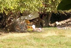 سکونتگاه غیررسمی در باغات حومه شهر نهاوند ساماندهی شد