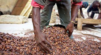 تولید کاکائو در آفریقا