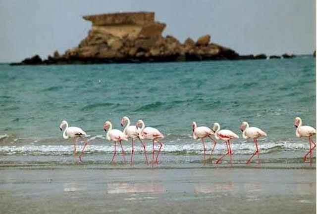 تداوم حال خوب دریاچه ارومیه وابسته به تامین حق آبه از منابع آب حوزه آبریز
