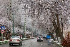 تمامی راههای اصلی استان باز است /مصرف بیش از ۵۰۰تن نمک وشن در جاده های برفی