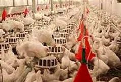 ایجاد پست های قرنطینه مرغ بدون حضور نیروی انتظامی برای کنترل آنفلوانزا غیر ممکن است
