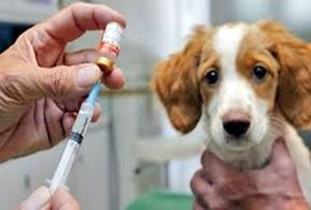 انجام واکسیناسیون و قلادهگذاری رایگان حیوانات خانگی در زاهدان