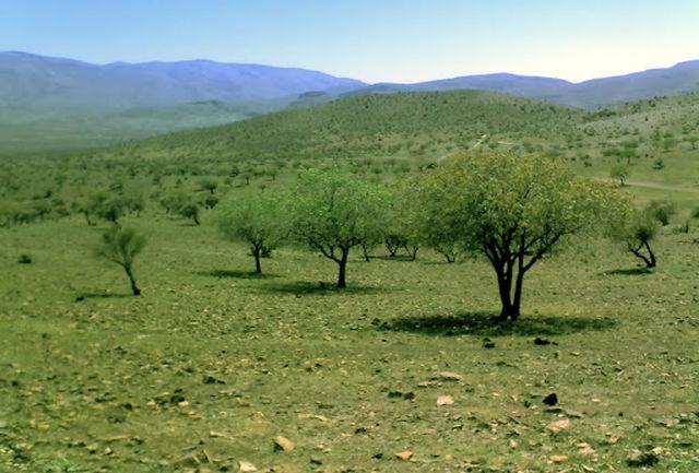 جنگل های چاتیز پاکسازی میشود